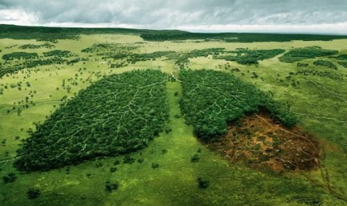 Шуме су наша плућа…